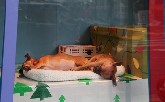 SPCA Puppies & Kittens in Macy's Windows