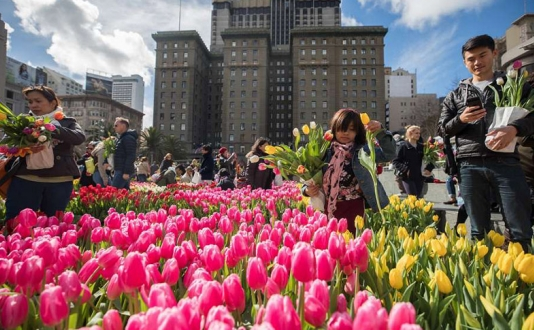American Tulip Day in Union Square, San Francisco